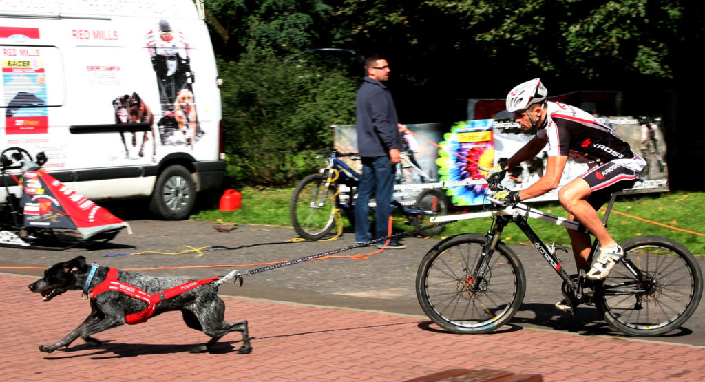 Zawody bikejoring